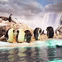 夏に行きたい名古屋港水族館