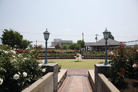 大野町バラ公園全体の様子