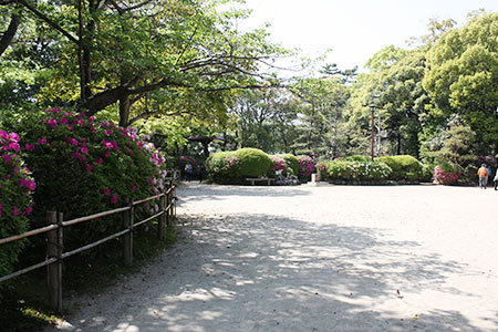 浅野公園のつつじ