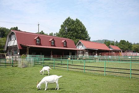 岐阜市畜産センター公園放牧