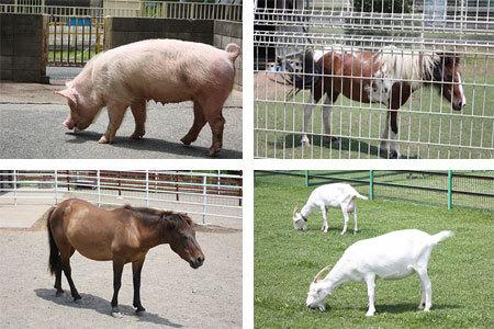 岐阜市畜産センター公園動物