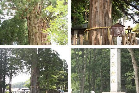 戸隠神社中社三本杉