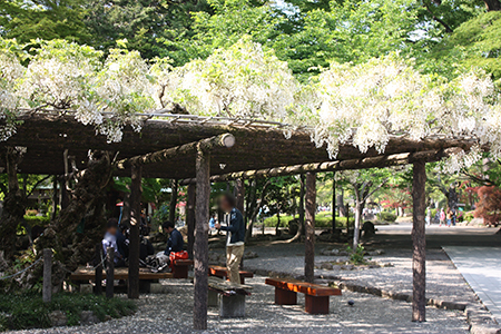 岐阜公園季節の花