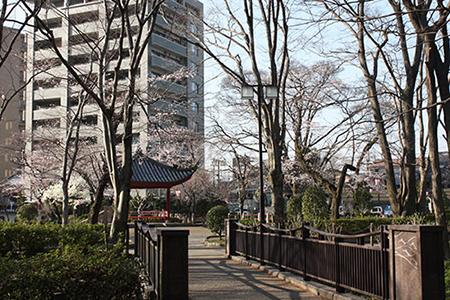 岐阜公園の桜