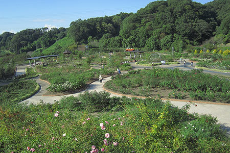 花フェスタ記念公園の秋バラまつり