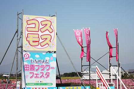 羽島市のコスモス畑