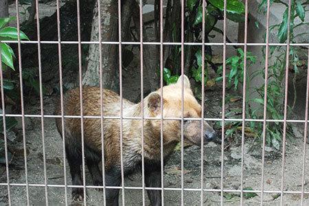 東山動物園肉食動物