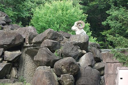東山動物園やぎ