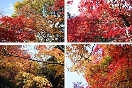 定光寺の色づいた紅葉