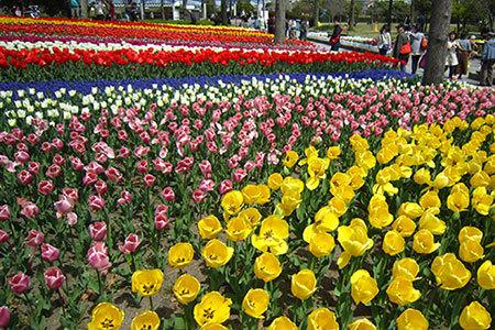 木曽三川公園センターのチューリップ祭り