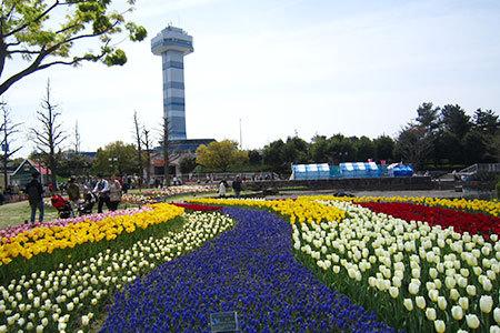 木曽三川公園チューリップ祭り