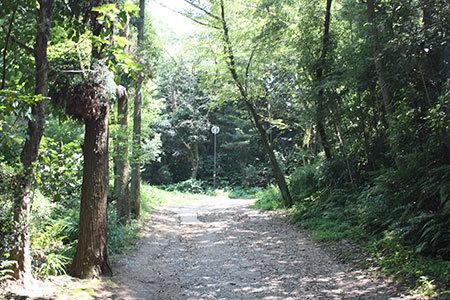 小牧山遊歩道