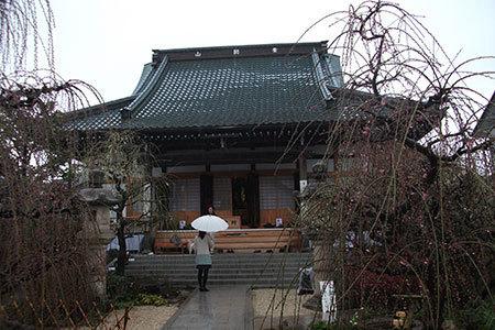光受寺の梅