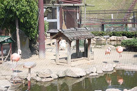 鞍ヶ池公園フラミンゴ