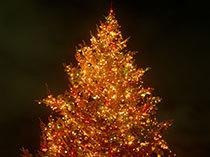 クリスマスに行きたいスポット