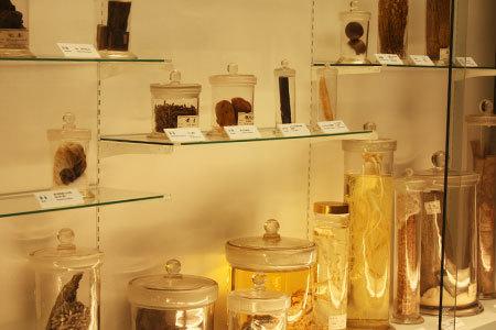 内藤くすり博物館展示物
