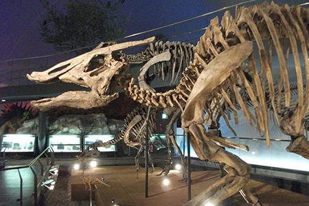 恐竜博物館模型