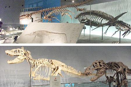恐竜博物館化石