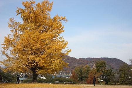 学びの森プロムナードの秋
