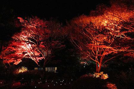 明治村の紅葉ライトアップ
