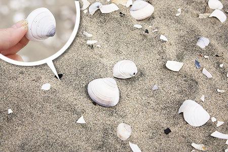 阿漕浦海水浴場砂浜