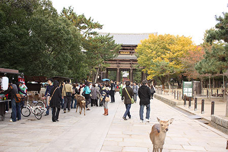 奈良公園東大寺