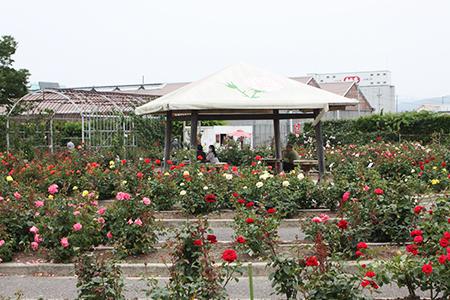 西尾市憩の農園・バラ園