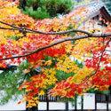 京都府の宿泊施設