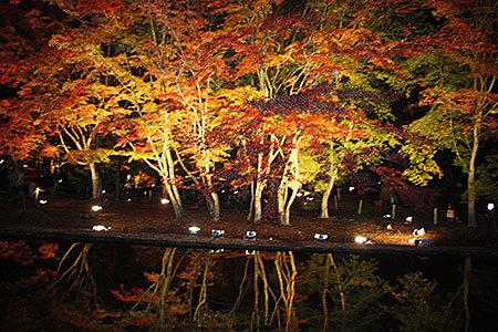 曽木公園ライトアップ