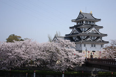 墨俣一夜城・犀川堤の桜