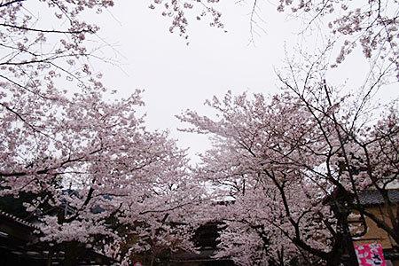 谷汲山華厳寺の桜まつり