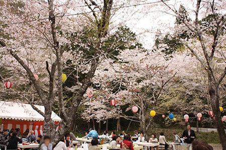 寺尾千本桜公園の桜
