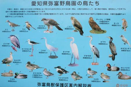 弥富野鳥園