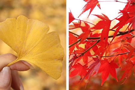 雄日ヶ丘公園紅葉
