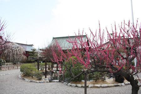 結城神社の梅まつり